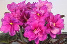 ЕК-Цветок Папоротника