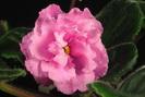 ЕК-Шелковые Розы