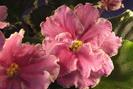 ЕК-Розовый Фламинго