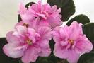 ЕК-Розовый Мрамор