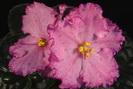 ЕК-Вишневые Веснушки