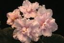 ЕК-Ангельский Цветок