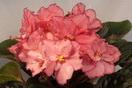 ЕК-Розовый Янтарь