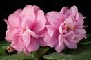 ЕК-Розовые Балеринки
