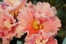 ЕК-Апельсиновые Дольки