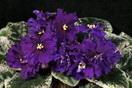 ЕК-Фиолетовый Шатёр