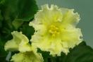 ЕК-Лимонные Дольки