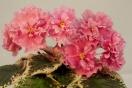 ЕК-Розовый Хрусталь