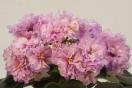 ЕК-Розовый Крепдешин