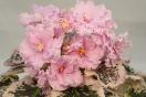 ЕК-Танец Розовых Облаков