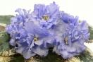 ЕК-Голубая Красавица Азии