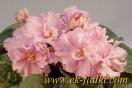 ЕК-Розовые Купальщицы